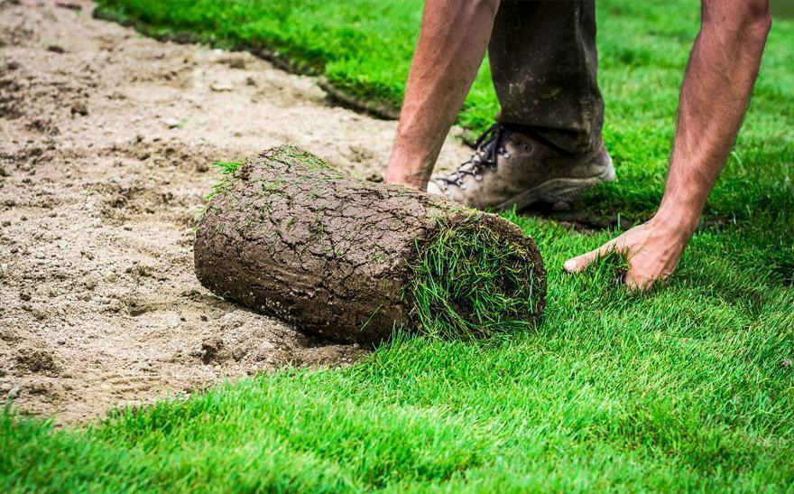 rozwianie trawy